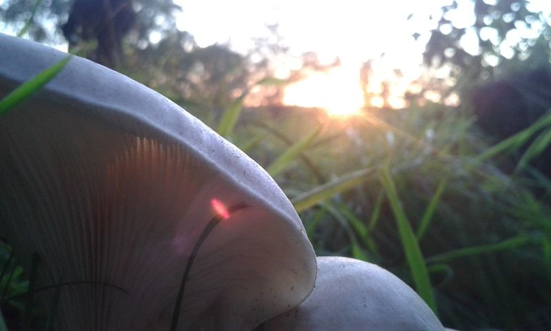 Sun Sunset Nature Summer Sunlight Defocused Grass Outdoors Close-up Vacations Rural Scene Beauty Day No People Beauty In Nature Space Sky Tree In The Background Earth 🌏 Is Beautiful Mushrooms 🍄🍄 Sunlight Beauty In Nature Freshness Landscape Beautiful Lost In The Landscape Connected By Travel EyeEmNewHere