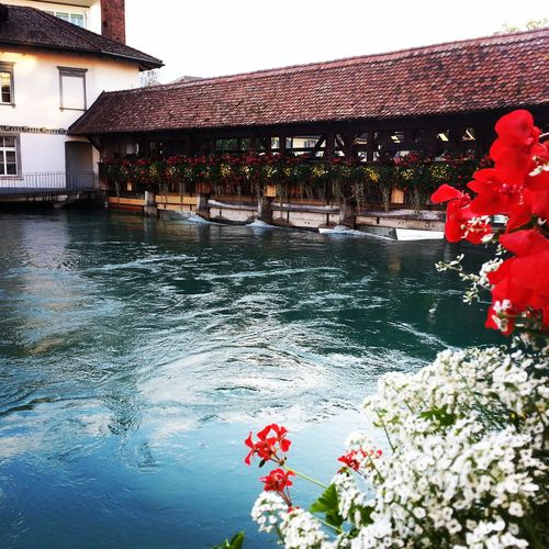 Thun Swiss Traveling