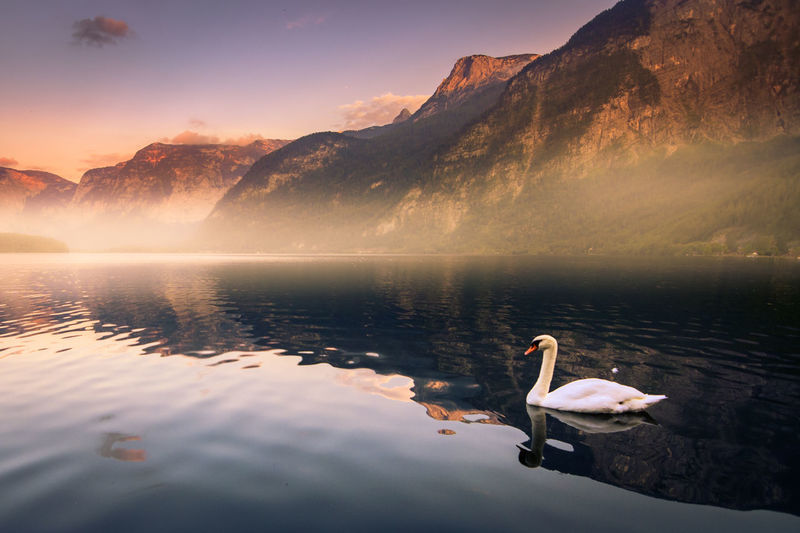 Ducks swimming in lake against mountains