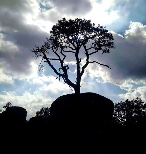Silhouette Cloud - Sky Tree Nature No People Tranquility Low Angle View Beauty In Nature Paisaje Landscape Naturaleza Durango Tranquility Stone Piedras Paseo