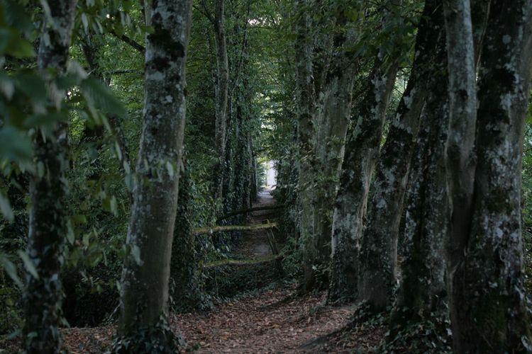The Way Trees