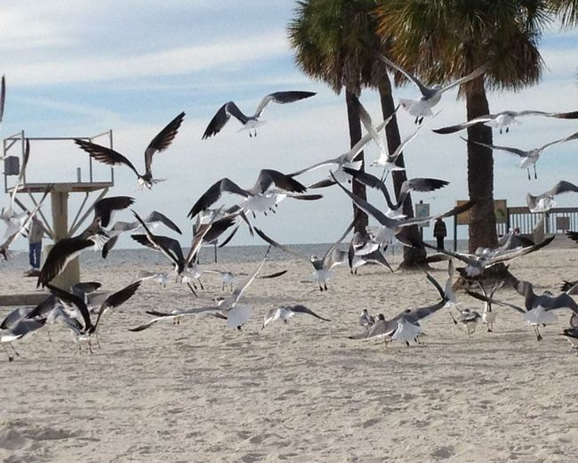 View of birds on shore