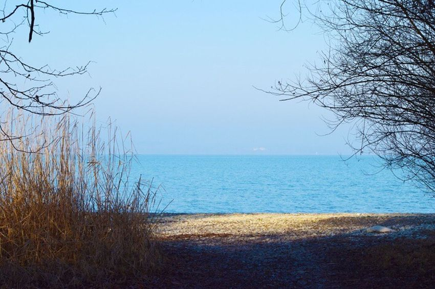 Sea Water Nature Horizon Over Water Beauty In Nature Scenics Bare Tree Beach Tranquility Outdoors Tranquil Scene No People Marram Grass Sky Day Grass Tree Clear Sky Bodensee Bodenseeregion Bodenseebilder Seeufer