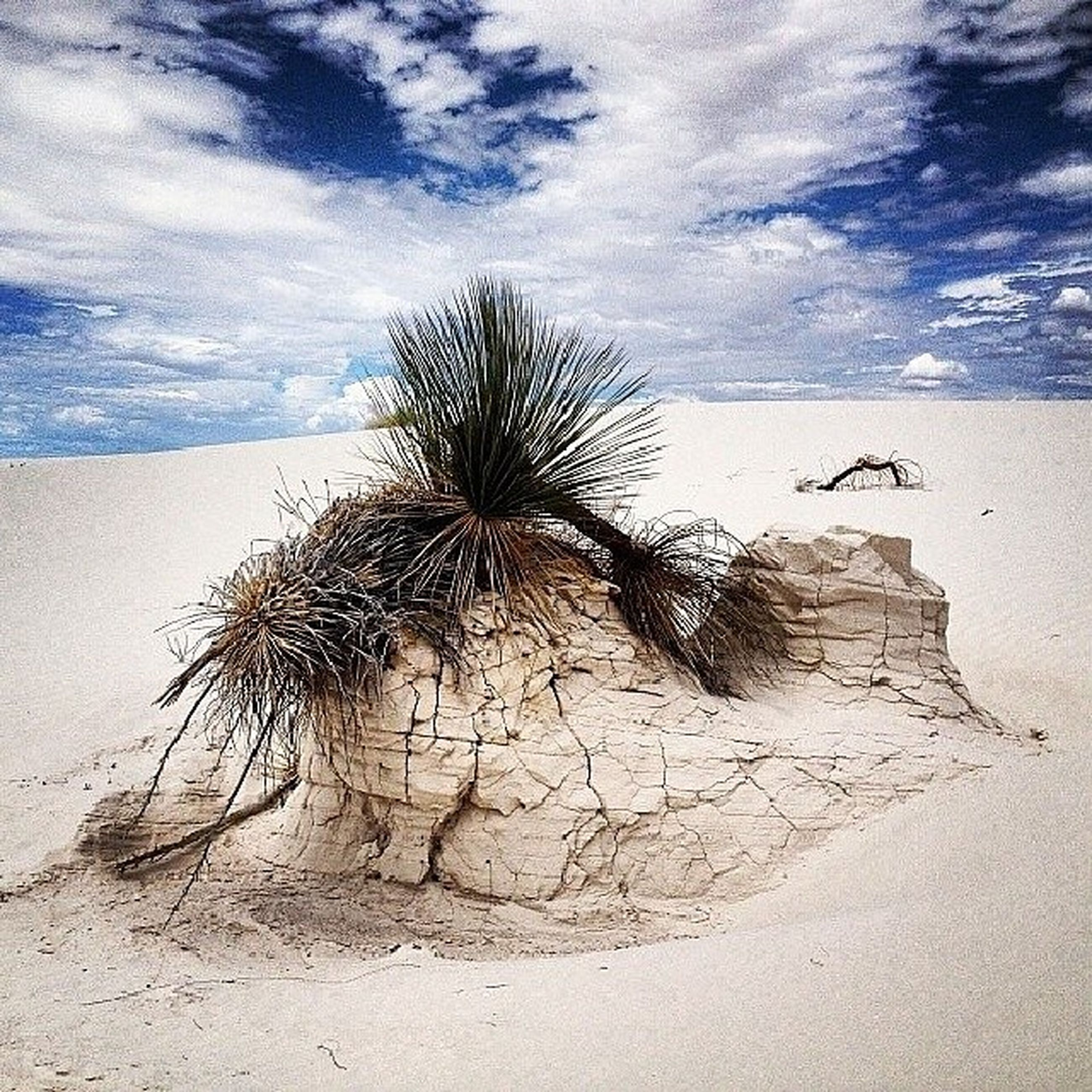 sky, palm tree, beach, sand, nature, cloud - sky, shore, tranquility, day, outdoors, no people, sea, low angle view, cloud, dead plant, tree, beauty in nature, wall - building feature, growth, shadow