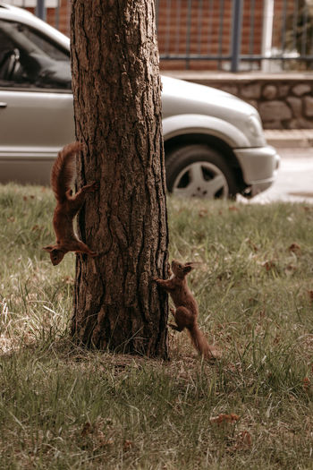 Dog on tree trunk