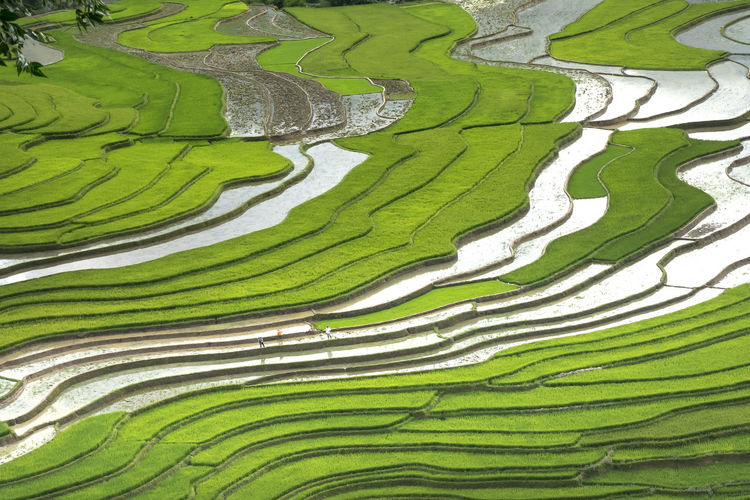 The image is as beautiful as the oil painting of terraced field. Curved lines of Terraced rice field during the watering season at the time before starting to grow rice in Mu Cang Chai Agriculture Curves Farm Farmer Field Land Rice Tranquility Travel Colorful Culture Environment Ethnic Minorities Ground Harvest Horticulture Landscape Mountain Nature Paddy Field Season  Tetraced Valley Water