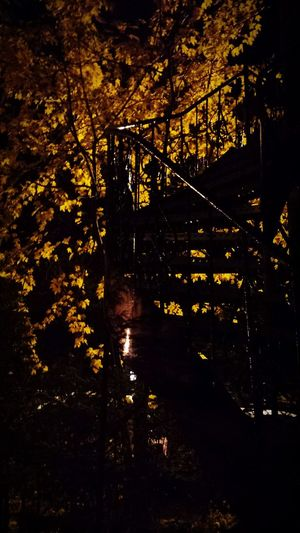 Stairs Escalier En Colimaçon Beauty In Nature Tree Autumn Escalier 11eme Rue Limoilou