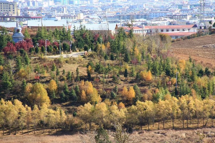 Full frame Scenics Beautiful Amazing Photography Autumn Scenery Scenics - Nature Landscape Tree Area Countryside Rural Scene Garden Architecture Shangri-La Outdoors Panorama Panoramic China Travel Autumn Leaves Tree City Sky Architecture Building Exterior Plant Blooming