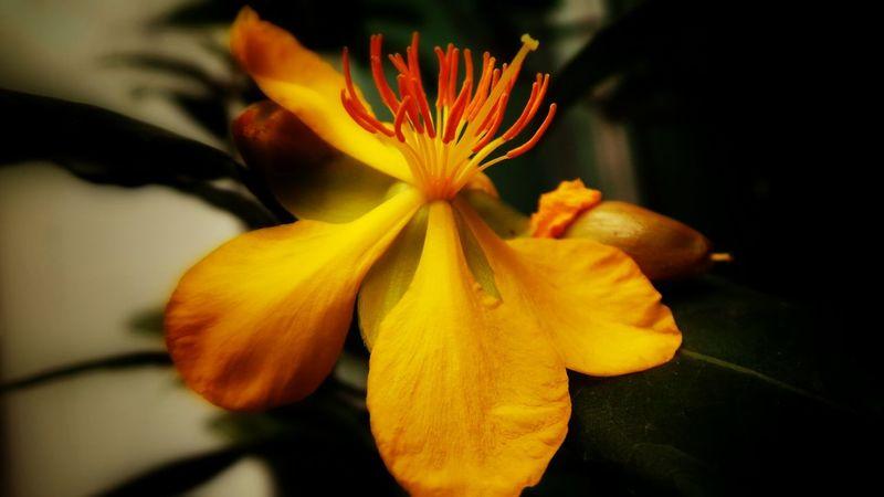 EyeEm Nature Lover Macro_flower