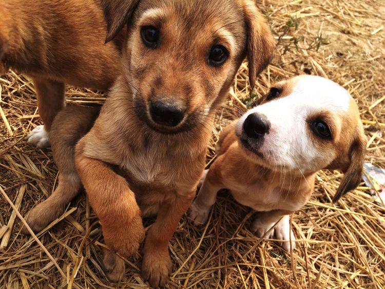Puppies looking so cute Domestic Animals Mammal Animal Themes Dog Pets Looking At Camera High Angle View Puppy Togetherness Close-up Outdoors Day Fresh On Eyeem  Beautiful