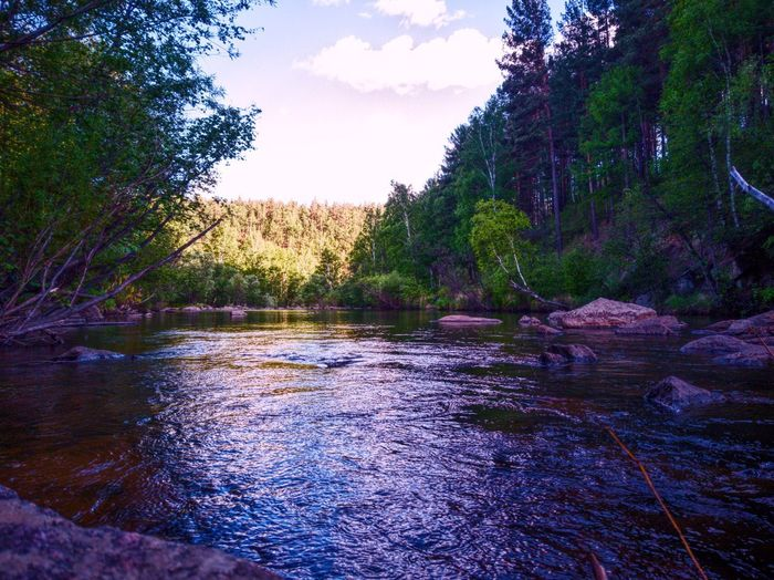 Scenic view of river in forest against sky