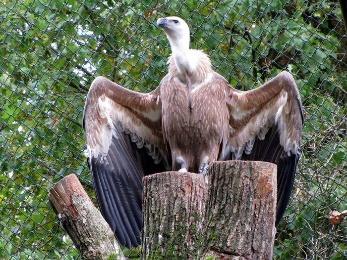 Birds perching on wood