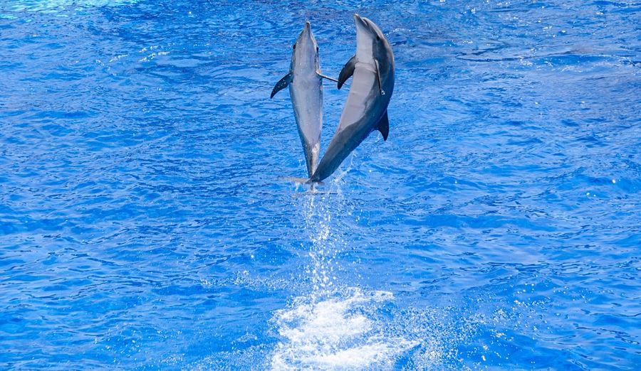 Dolphin leaping at sea