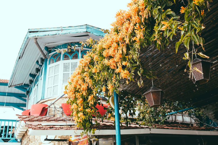 Flowers of Tel Aviv Rooftop Architecture Autumn Building Building Exterior Built Structure Change City Day Flower Flowering Plant Flowers On The Wall Freshness Growth Low Angle View Nature No People Orange Color Outdoors Plant Residential District Sky Street Tree