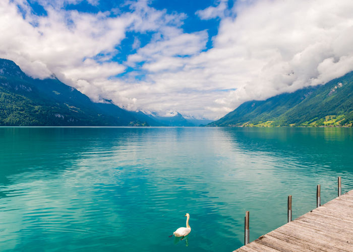 Animal Beauty In Nature Bird Cloud - Sky Day Idyllic Lake Mountain Mountain Range Nature No People Non-urban Scene Scenics - Nature Sky Tranquil Scene Tranquility Turquoise Colored Vertebrate Water Waterfront