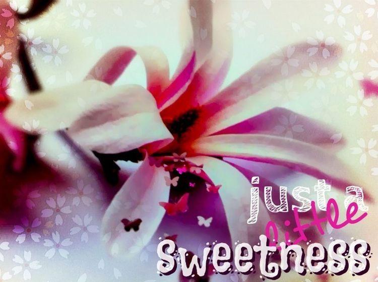 Sweets Flowers Pink Enjoying Life