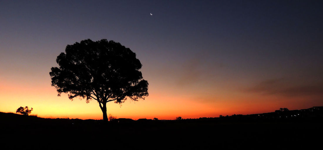 Silhouette tree on landscape against the sky