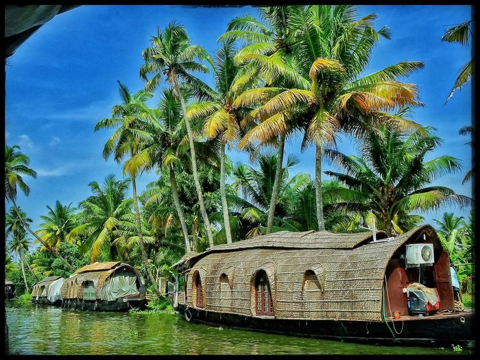 Kerala Kerala_tourism Houseboat Tourism EyeEm Gallery EyeEm Best Shots Nature Backwaters Boating Southindia Coconut Trees Outdoors River