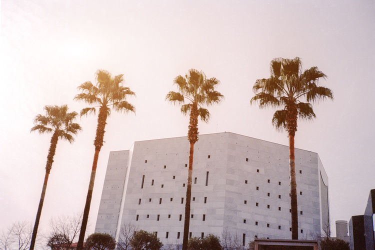 Architecture Building Building Exterior Built Structure City Day Exterior Growth Low Angle View Modern Nice Nice, France No People Office Building Outdoors Palm Tree Palms Sky Sun Sunset, Tall Tall - High Travel Destinations Tree Tree Trunk