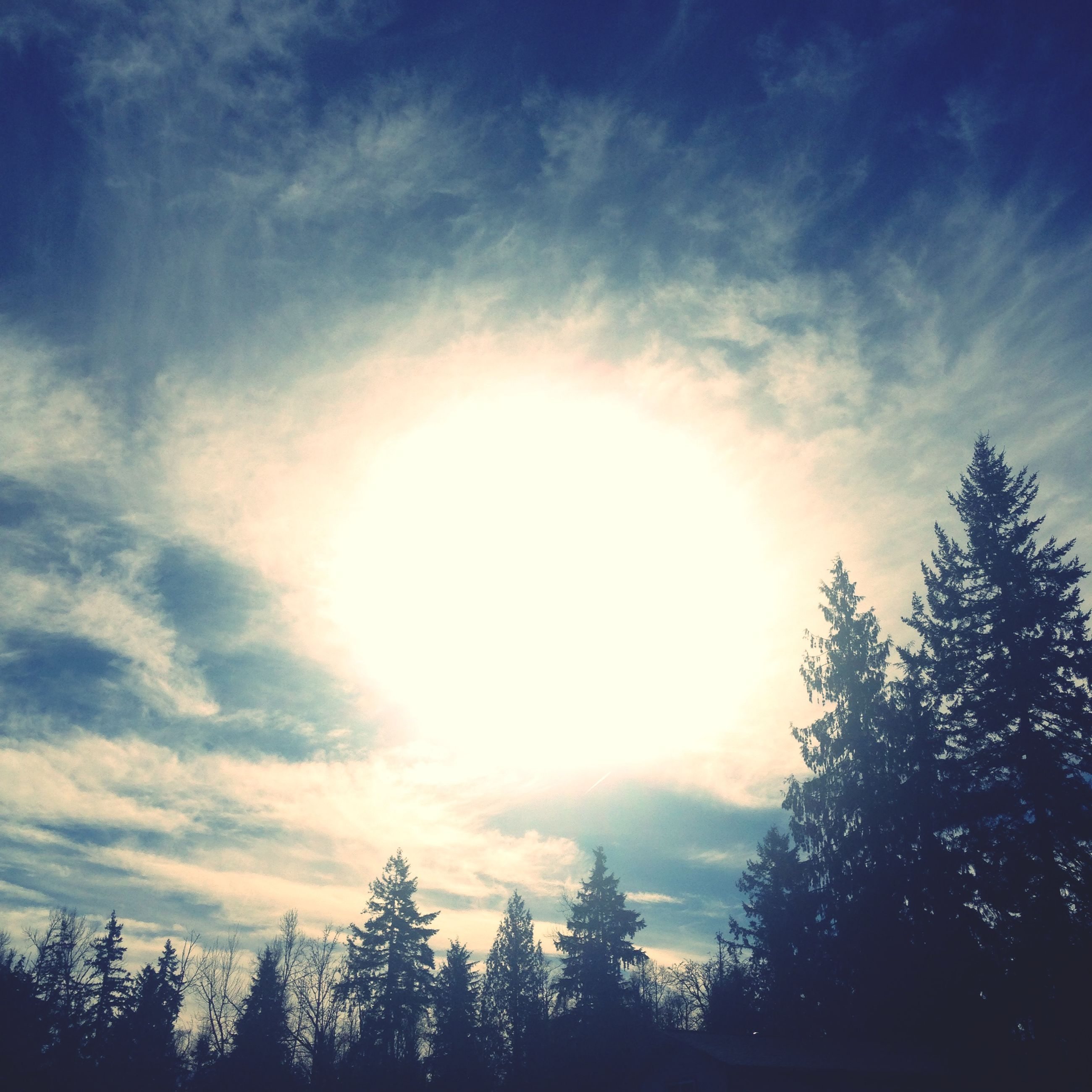 tree, sky, low angle view, tranquility, beauty in nature, cloud - sky, sun, silhouette, scenics, tranquil scene, sunbeam, nature, sunlight, cloud, cloudy, blue, idyllic, outdoors, no people, lens flare