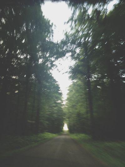 Foret De Vouillé Trees