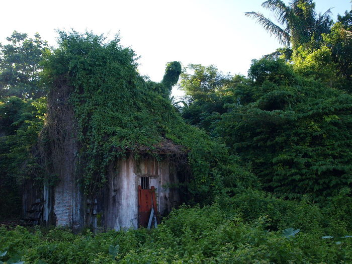 Bangka, Indonesia Built Structure Empty House Grass Green Green Color Muntok Bangka No People Not For Sale Old Buikd