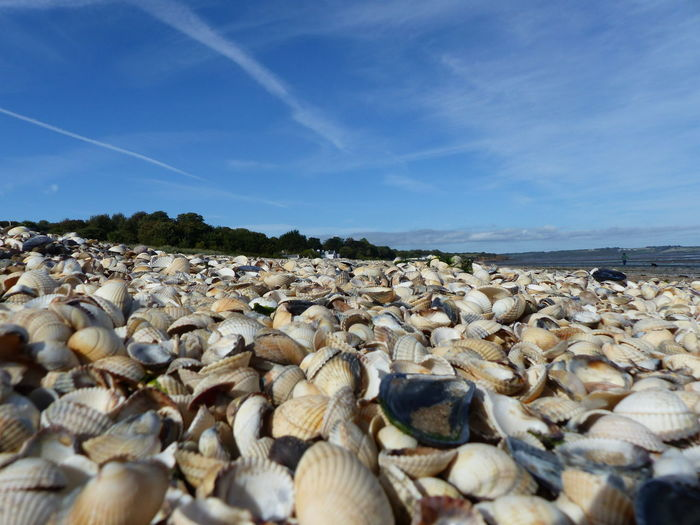 woodstown beach Abundance Animal Shell Beach Beauty In Nature Blue Cloud - Sky Day Land Large Group Of Objects Nature No People Pebble Rock Scenics - Nature Sea Seashell Seashells Seashell❤ Shell Sky Surface Level Tranquil Scene Tranquility Water Woodstown EyeEmNewHere My Best Travel Photo