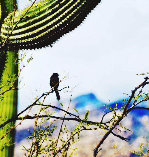 Cactus perch Animal Themes Desert Tucson Cactus