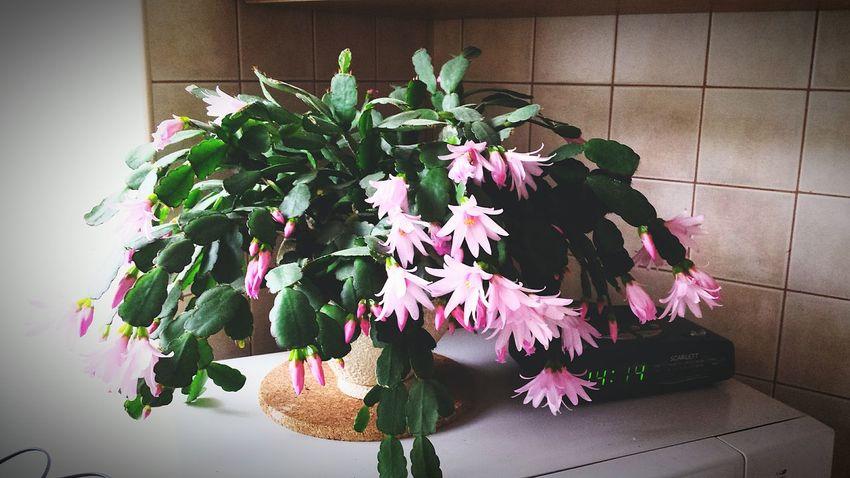 Popylar Photos Good Day! Flower Collection Flower Photography Flowers Cloock Flower Pot Houseplants