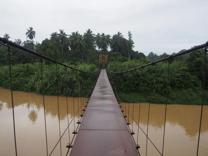 Reflection Of Trees On Bridge Against Sky