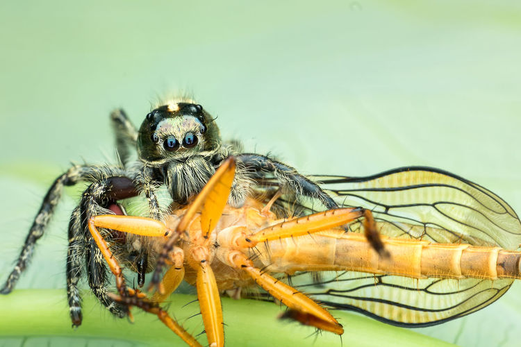 catch you... First Eyeem Photo Prey Animal Spider Nature_collection Eyenaturelover Robberfly