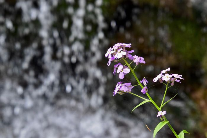 Waterfall Summer Ithaca Flower Flower Head Tree Springtime Pink Color Close-up Plant In Bloom Flowering Plant Petal Blooming Plant Life Pollen