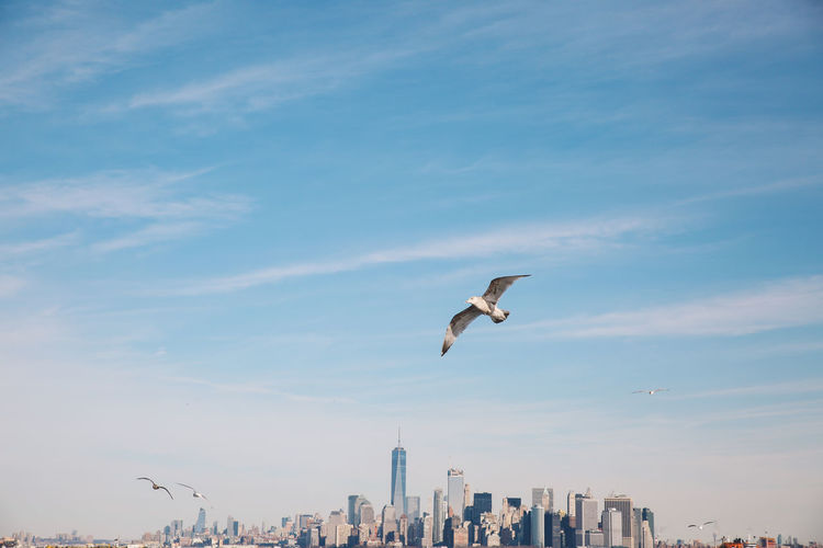Animal Themes Animals In The Wild Beauty In Nature Bird City Day Ferry Flying Low Angle View Manhattan Mid-air Motion Nature New York New York City No People Outdoors Sky Spread Wings Staten Island Ferry Winter Adapted To The City #urbanana: The Urban Playground