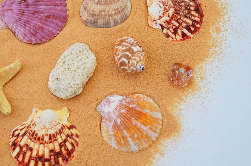 High Angle View Of Various Seashells And Sand On White Background