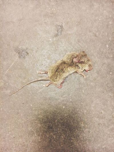 Little mouse Public Transportation Notes From The Underground Subway Sleeping