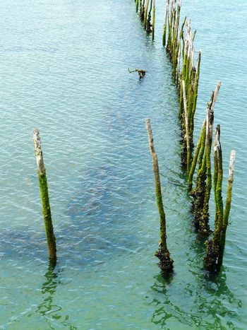 Des Piquets Wood Pillars Bouchot Poles Grand Piquey Piers Water Park Blue-green Water Large Group Of Pillars High Angle View No People Ferret Wood MaterialVertical Photography In Le Grand Piquey Bassin D Arcachon , France
