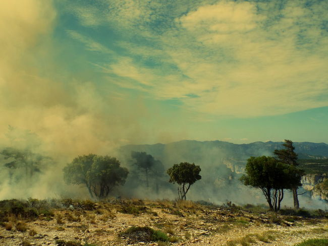 Beauty In Nature Cloud - Sky Controlled Fire In The Mountains Of Llaberia To Facilitate Reforestation Pi Roig (Red Pine) Idyllic Landscape Nature No People Non-urban Scene Outdoors Scenics Serra De Llaberia - Tivissa-Tarragona Sky Tranquil Scene Tranquility Weather