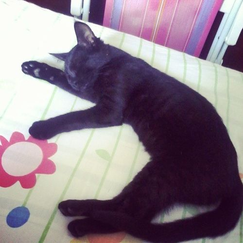 Resumo da tarde!! Cat Cute Thelastdayofmyvacation Sleep