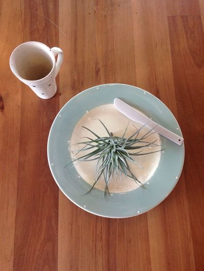 EyeEm Selects Food And Drink Table High Angle View Indoors  No People Directly Above Drink Food Freshness Day Close-up Morning Tillandsia Ceramic Craf