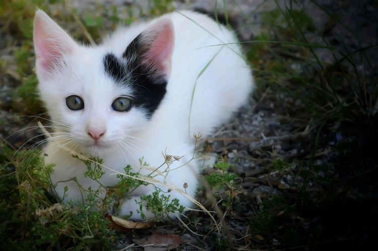 Animal Themes Close-up Day Kitty Cat Looking At Camera Nature No People One Animal Outdoors Pets Plant Portrait Qute Animals