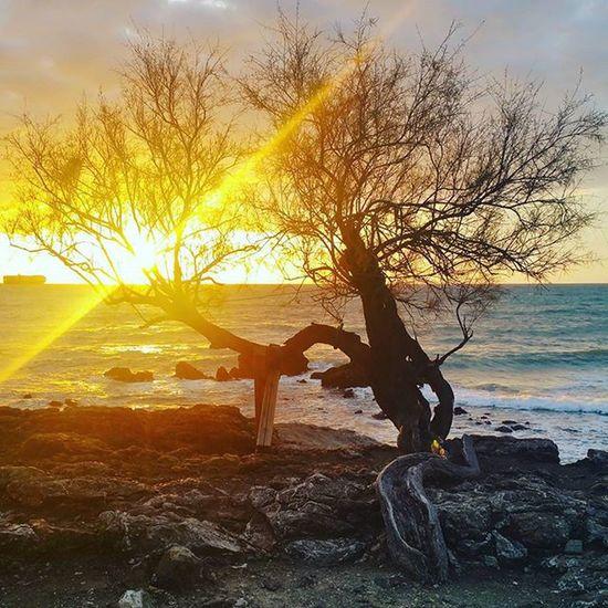 Sunset Antignano Livorno Photooftheday Igerslivorno Igersitalia Tree Sun Sea Tramonto Leghorn