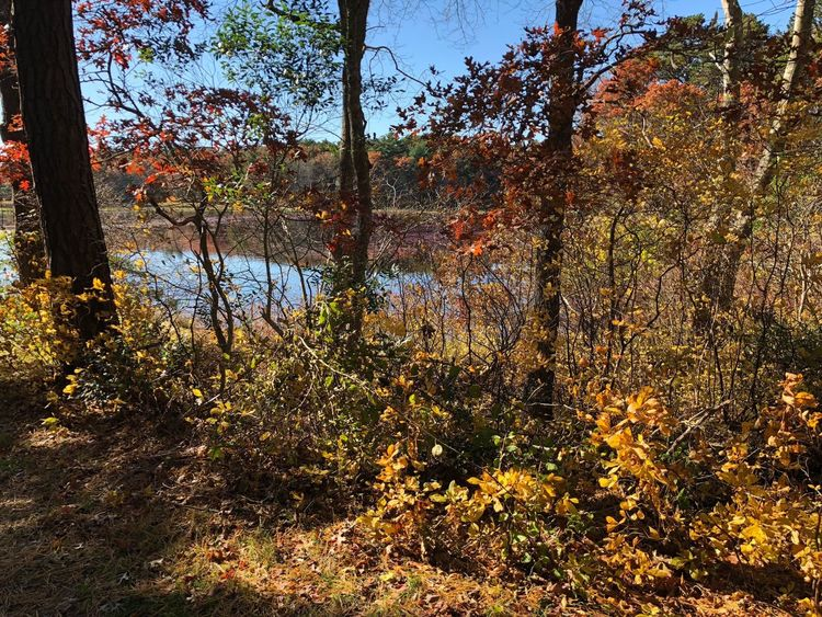 Country scene in Bourne Cape Cod Tree Plant Autumn Tranquility Beauty In Nature Forest