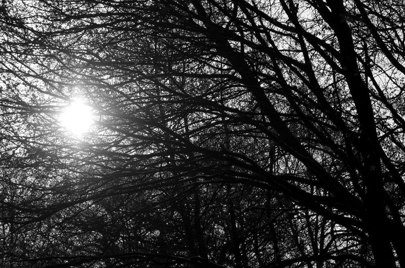Low angle view of trees in forest against bright sun