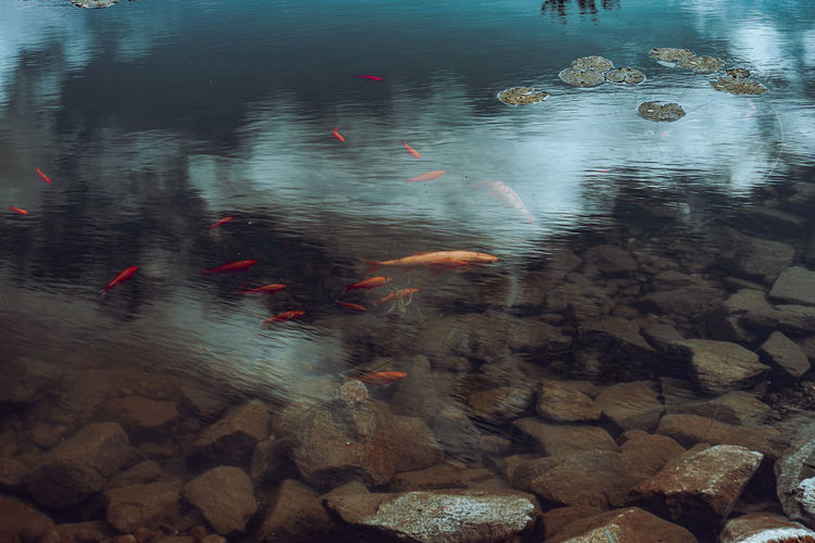 View of fish swimming in water