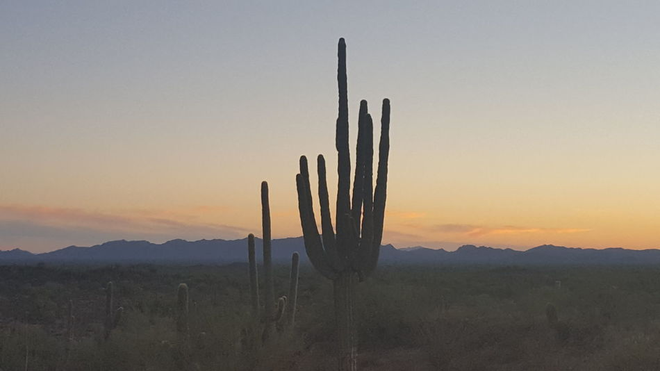Sunset Wilderness Area No People Outdoors Sky Landscape Mountain Business Finance And Industry Arid Climate Nature Cactus Ecosystem  Day Eye4photography  EyeEm Gallery EyeEm Nature Lover