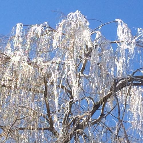 Our Amazing Sun making the Willow Tree glistening in the sun. No Edit No Filter No People , WINTER After an Ice Storm Beauty Of Slience Nature On Your Doorstep