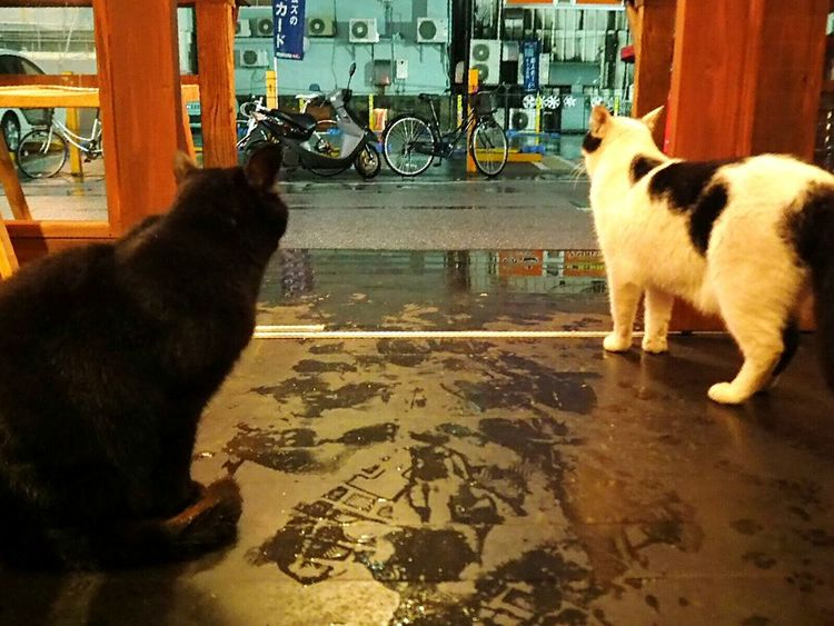 Cat Streetphotography 猫 Cats Of EyeEm Taking Shelter From Rain Taking Shelter 雨宿り