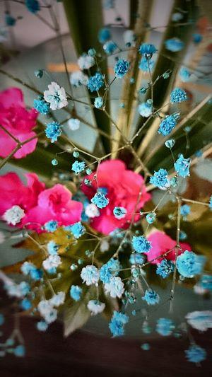 オハヨォ(≧∀≦*)ノ~~ 生け花 Flower Arrangement