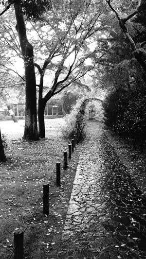 Tonogayato Garden Hagi Tunnel Tokyonature Urban Nature Nature Naturelover EyeEm Nature Lover Naturephotography Enjoying Nature Nature_collection Place Of Scenic Beauty Tokyo Japan Travel Photography Bnw Bnw_collection Bnw_captures Bnwphotography Bnw_tokyo
