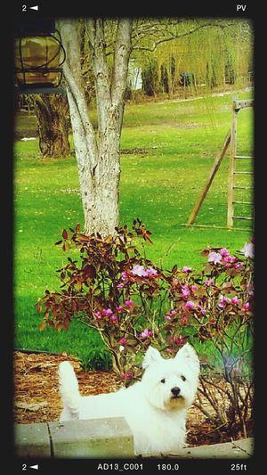 Minnie enjoying a lovely spring day
